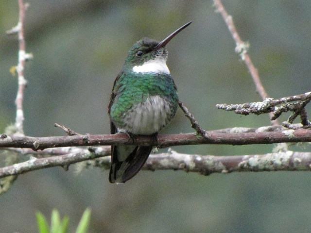Birding Brazil 2010 Hummingbirds